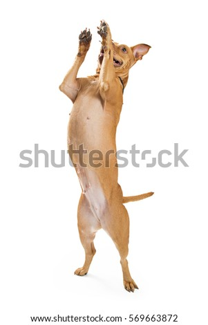 Dog Standing Stock Images, Royalty-Free Images & Vectors ...