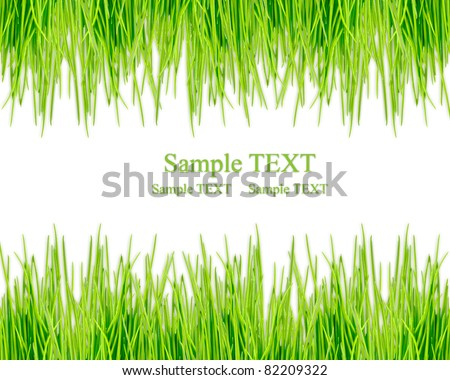Over view of grass on white background - stock photo