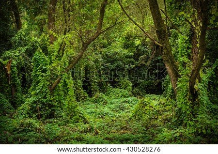 overgrown forest opening, summer