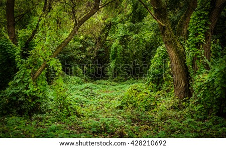 overgrown with liana thicket - stock photo