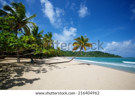 Overhanging palm tree on the white sands of Andilana Beach. Nosy be island with lush vegetation extends to the left. Turquoise waters of Mozambique Channel on the right. Blue sky with clouds above.