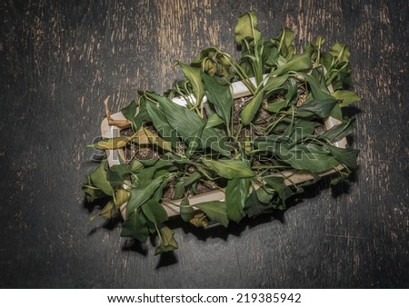 overhead view of wilted plant - stock photo