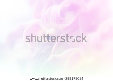Overlay of orchid with soft colorful background