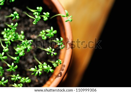 overlooking green seedling - stock photo