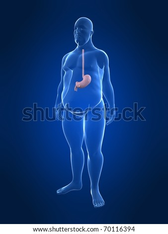overweight male - stomach