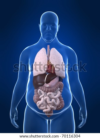 overweight man - anatomy - stock photo