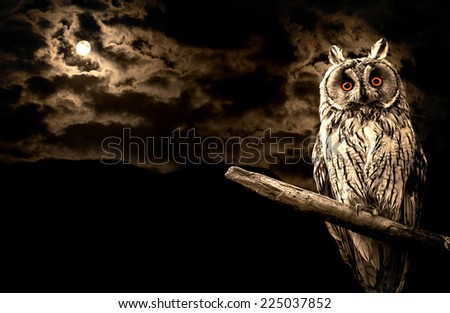 owl and full moon halloween abstract background - stock photo