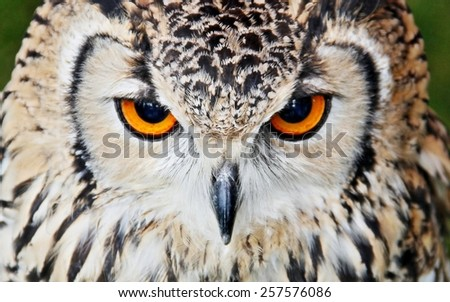 Owl, Beak, Eyes. - stock photo