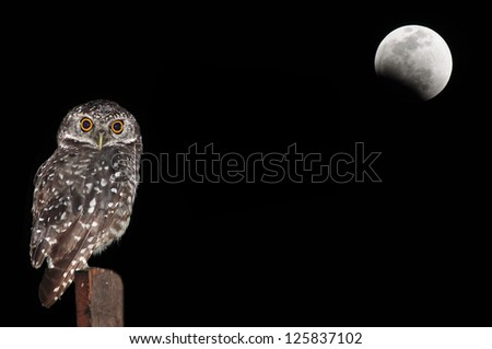Owl bird sitting at night - stock photo