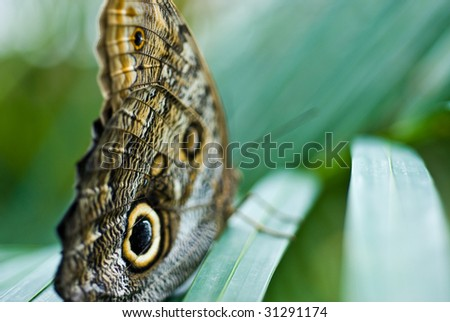 Owl butterfly abstract - stock photo
