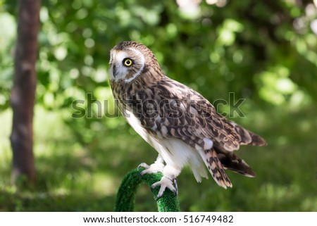 Owl in a garden In summer