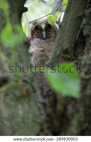 Owl on the tree - stock photo
