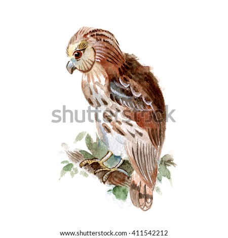 Owl seated  on a branch isolated on a white background, watercolor
