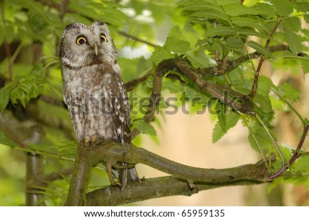 Owl sitting on a tree.