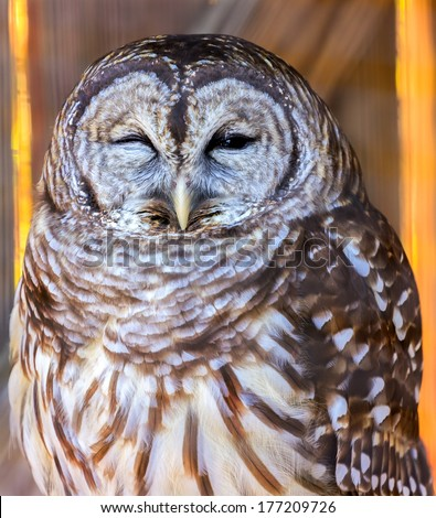 Owl sleeping - stock photo