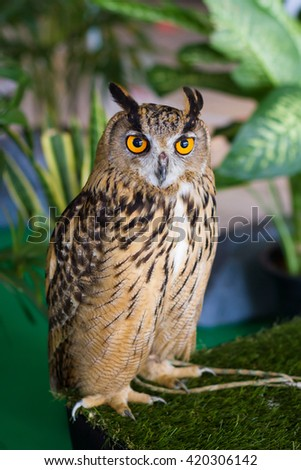 Owls are predators talented and beautiful. - stock photo