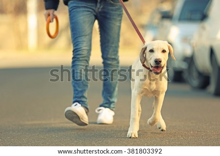 Owner and Labrador dog walking in city on unfocused background - stock photo