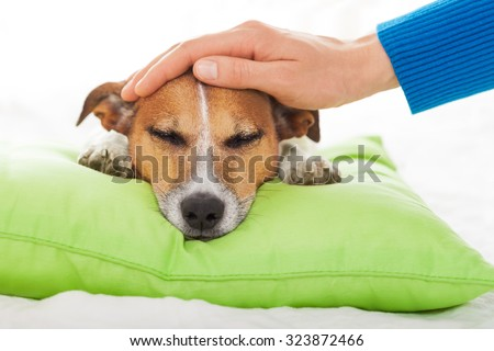 owner  petting his dog, while he is sleeping or resting  , feeling sick and ill with temperature, eyes closed - stock photo
