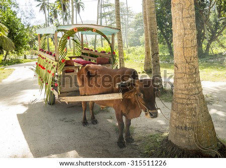 Ox cart for people transportation in La Digue Island, Seychelles - stock photo