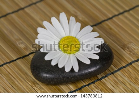 Oxeye Daisy on Hot Stone