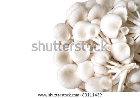 oyster mushroom - stock photo