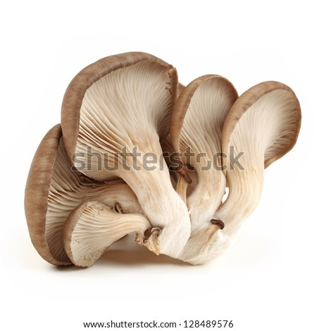oyster mushroom on white background - stock photo