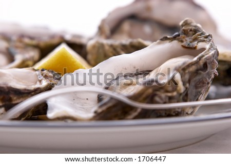 Oysters in their shell, with a lemon, a fork on a plate