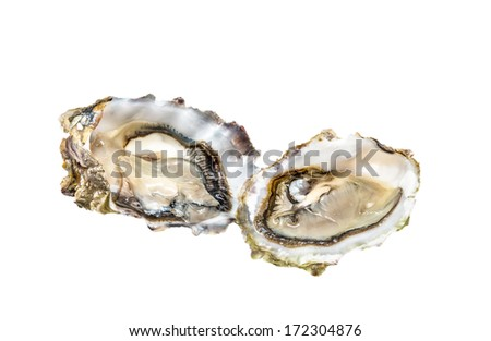 Oysters on white background - stock photo