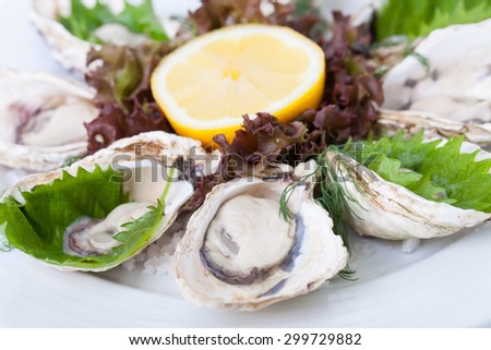 Oysters on white plate on a white background. - stock photo