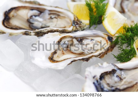 Oysters with lemon and dill on plate with ice - stock photo