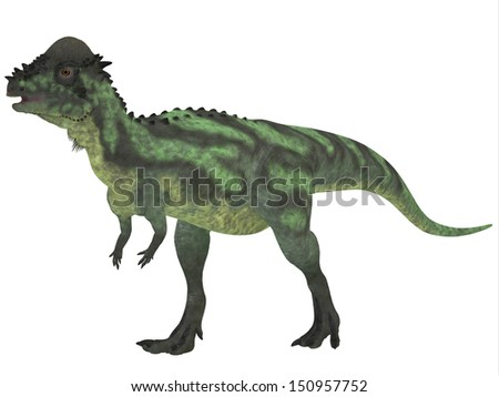 Pachycephalosaurus on White - Pachycephalosaurus dinosaur was a bipedal omnivore with an extremely thick skull roof and existed in the Cretaceous Period..