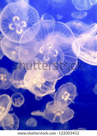 Pacific Coast, British Columbia, Jellyfish - stock photo