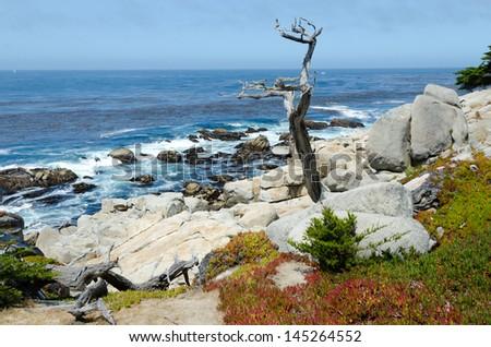 Pacific cost scenery in Monterey, California  - stock photo