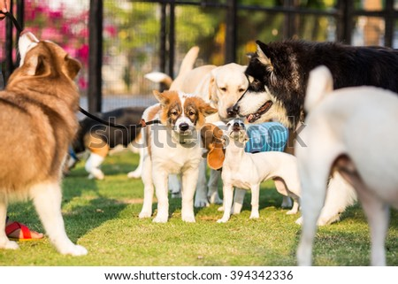 Pack of dog Thai Bangkaew, Jack russel, Siberian husky, Labrador retriver in the garden - stock photo