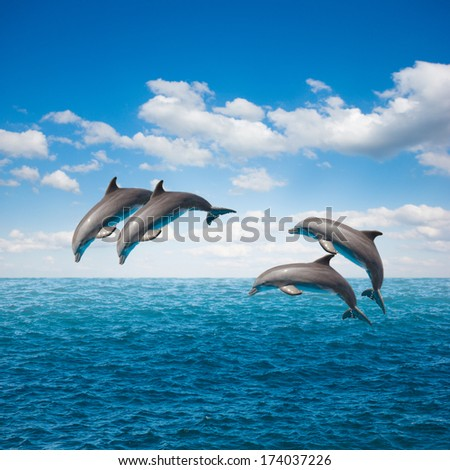 pack of  of jumping dolphins,beautiful seascape with deep  ocean  waters and cloudscape - stock photo
