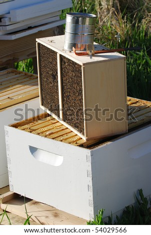 Package of bees ready to put in a beehives.