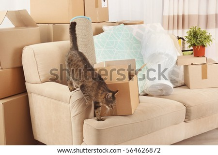 House Cat Stock Images, Royalty-Free Images & Vectors | Shutterstock
