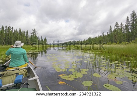 Paddling Through Lily Pads on a Cloudy Day on Fran Lake in Quetico Provincial Park - stock photo