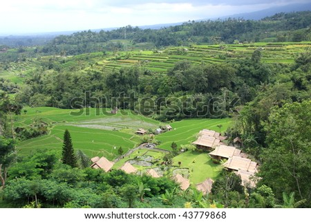 Paddy and Resort landscape