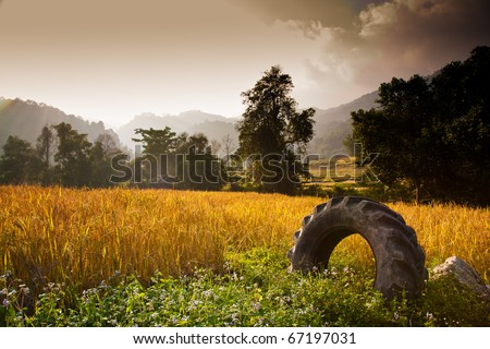 Paddy field with a tire in the morning - stock photo