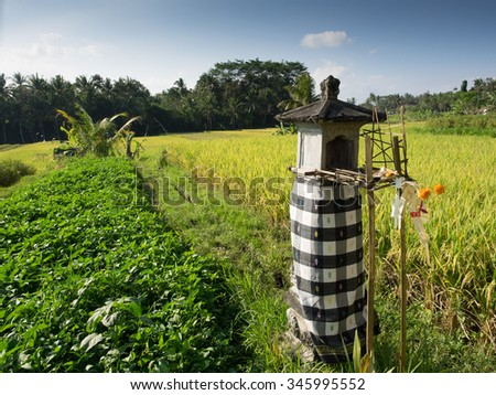 Paddy Fields, Bali, Indonesia - stock photo