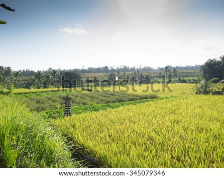 Paddy fields in rural Bali, Indonesia - stock photo