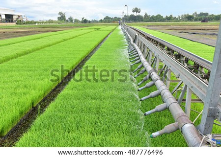 Paddy nursery seedlings with Automatic watering systems in the planting in the field.