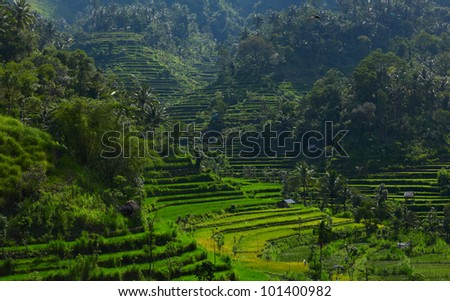 Paddy rice fields in a mountains - stock photo