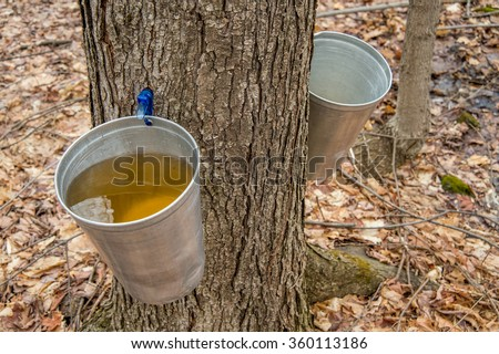 Maple Syrup Stock Images Royalty Free Images Amp Vectors