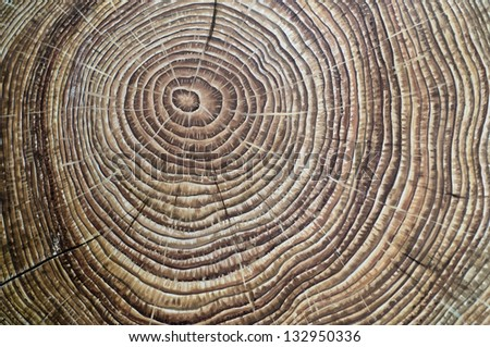 Painted brown wooden annual rings - stock photo