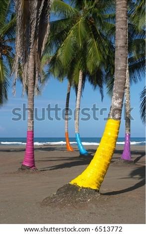 Painted Palms, Costa Rica - stock photo