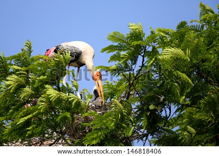 Painted stork with her nest - stock photo