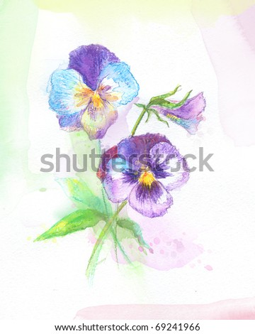 Painted watercolor pansies - stock photo