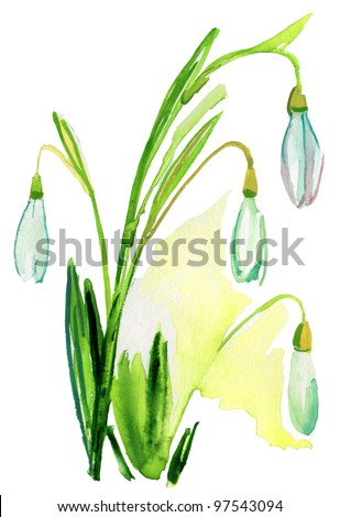 Painted watercolor  snowdrops - stock photo